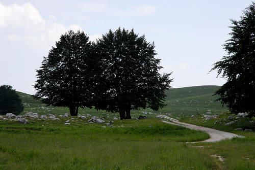 Piancavallo Passeggiata Delle Malghe Al Piancavallo In