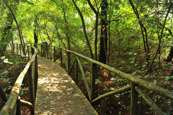 Giardino Botanico Litoraneo Di Porto Caleri A Rosolina