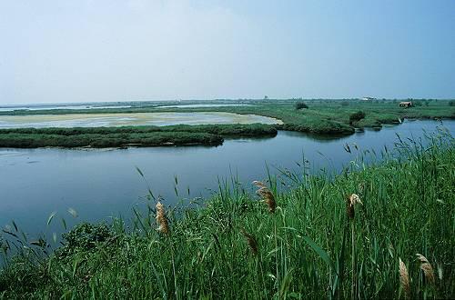 Rosolina Mare In Bicicletta Sul Delta Del Po Laguna Di