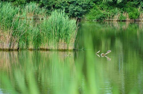 oasi wwf degli stagni di casale a vicenza  passeggiate
