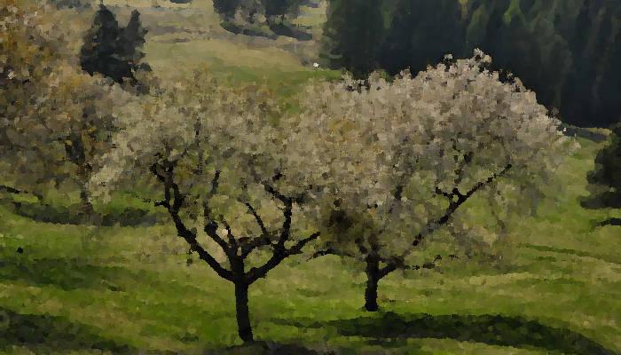 Natura E Paesaggio Veneto Friuli Venezia Giulia Trentino